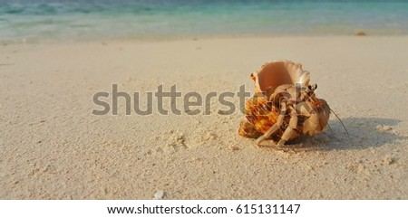 Hermit crab on the sand at sunrise sunset and sea background