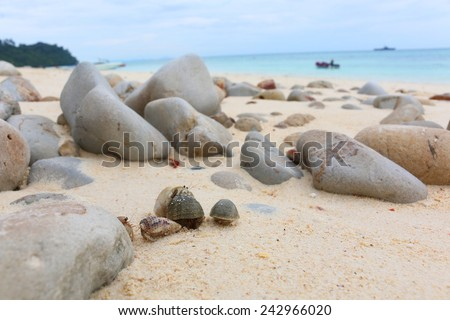 Hermit crabs hiding under the rocks for Propagation - stock photo