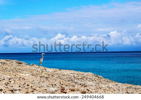 Heron and sea landscape - stock photo