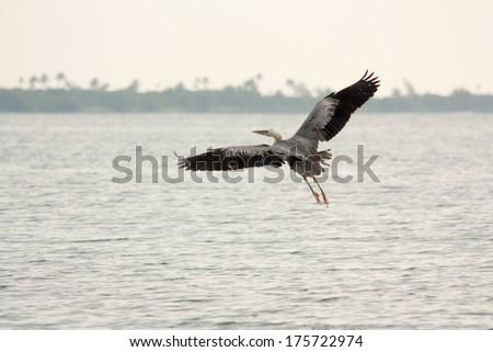 heron, egret - stock photo