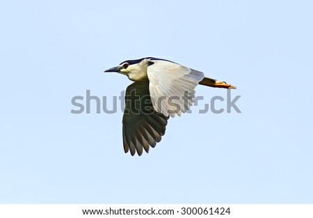 Heron on a background of blue sky in flight - stock photo