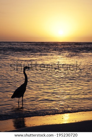 Heron on the Beach at sunset in Florida - stock photo