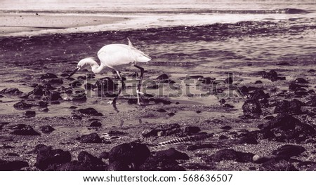 Heron on the beach fishing