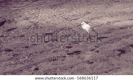 Heron on the beach on the sand