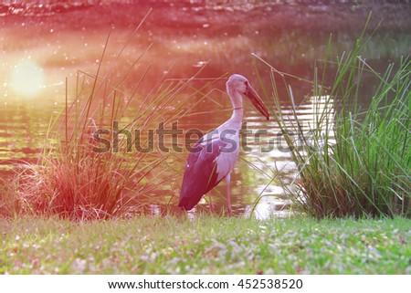 heron standing in the garden - stock photo