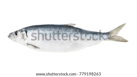Herring fish isolated