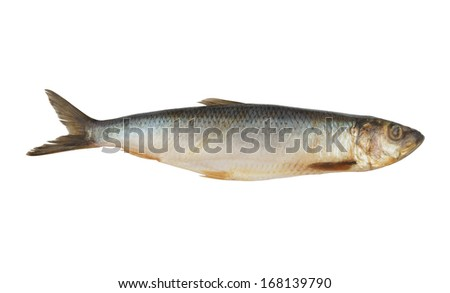 Herring fish isolated on white background