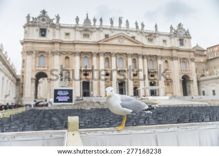 Herring Gull at St. Peter's Square near with Cathedral.Vatican.Rome. Italy. March 17 2015 - stock photo