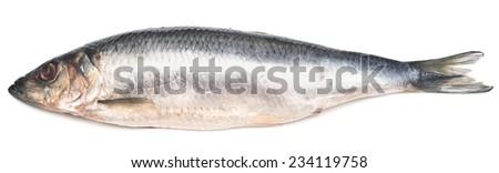 herring isolated on white background - stock photo