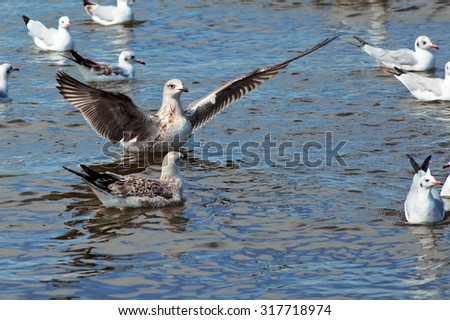 Heuglin's gull or Siberian gull (Larus heuglini) is a seabird in the genus Larus. It is closely related to the lesser black-backed gull (Larus fuscus) and is often classified as a subspecies of it. - stock photo