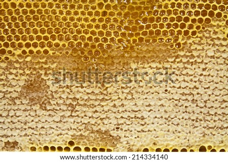 Hexagonal cell honeycomb with honey gathered in closeup - stock photo