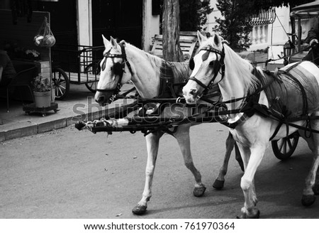 Heybeliada's traditional passenger transport vehicle. Phaetons, horse carriages and horses. Istanbul. Turkey. October 2017.