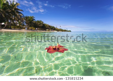 Hibiscus floating off tropical Fiji island - stock photo