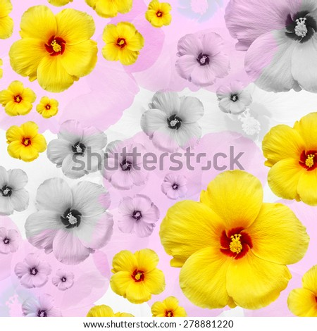 Hibiscus flower with colorful background. - stock photo
