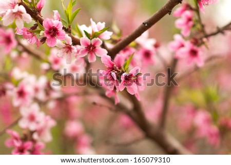 hickory in a park, Beijing - stock photo