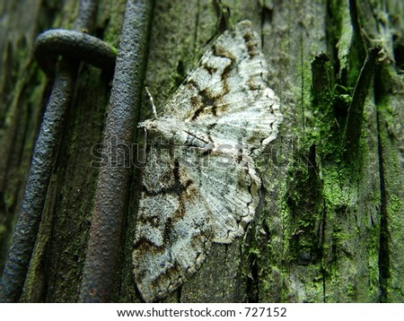 Hide butterfly - stock photo