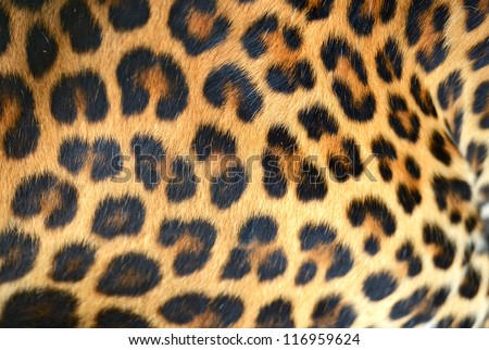 Hide of Leopard - stock photo