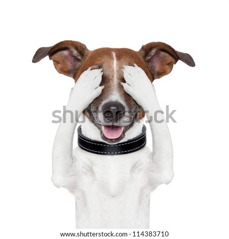 hiding covering both eyes dog - stock photo