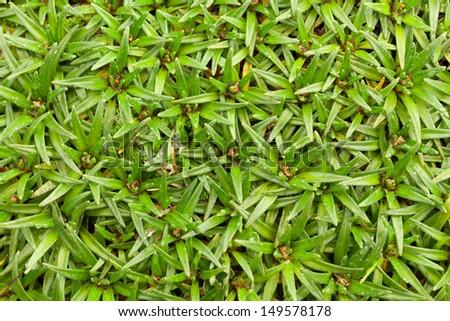 High altitude algae and mosses, Llanganates national park, Ecuador - stock photo
