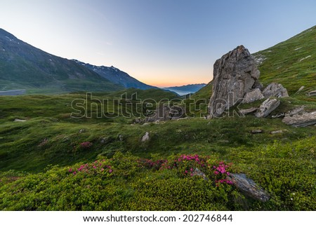 High altitude alpine landscape at dawn with blooming rhododendrons in the foreground. - stock photo