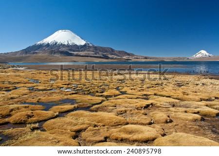 High altitude landscape  with Parinacota volcano - stock photo