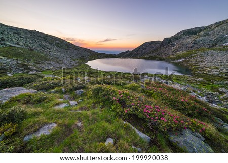 High altitude mountain lake at dawn, in idyllic uncontaminated environment with blooming rhododendrons in the foreground. Location: Italian Alps in Orsiera Regional Park, Piedmont. - stock photo