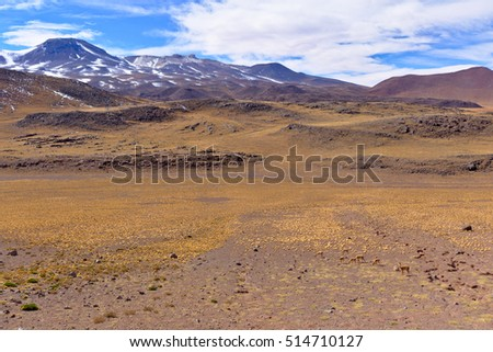 High altitude valley with mountains, vegetation and wildlife.