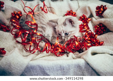 High Angle of kitten in ecru blanket with red gift tapes.