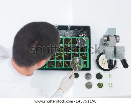 High angle over the shoulder view of a male laboratory technician or scientist checking seedlings in a tray during genetic engineering experiments - stock photo