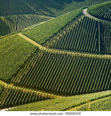 High angle view of a vineyard. Square shape - useful file for your brochure about your wine business, agriculture, agrotourism  and everything related to.