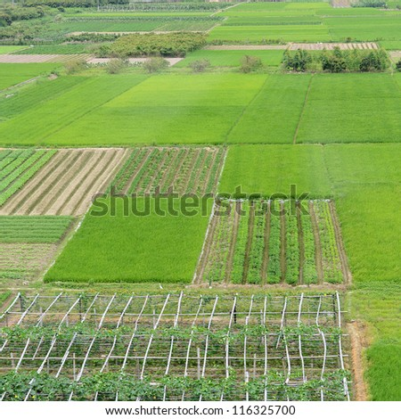 high angle view of large green farm land in China.