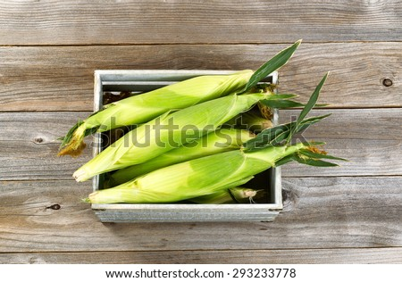 High angled view of a vintage wooden crate filled with freshly picked corn on rustic wood background. - stock photo