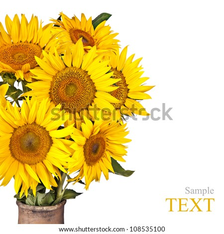 High contrast, vintage image of a rustic vase with beautiful yellow sunflowers flowers isolated on white - stock photo