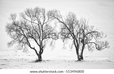 high contrasted black and white forest in winter time
