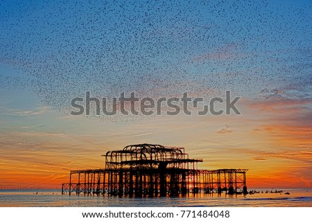 High definition and artistic image of murmuration over the ruins of Brighton's West Pier on the south coast of England. A flock of starlings swoops over the pier at sunset before roosting.