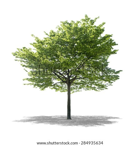 High definition tree isolated on white background