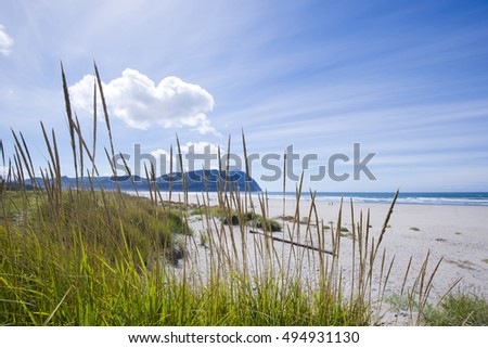 High dense sunshine grass with sprouted up cones with seeds on the sandy coastal dunes of Pacific Ocean with mountains lost in endless expanse of ocean power create unique atmosphere of Northwest
