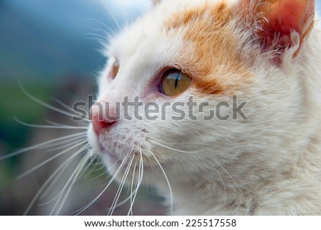 High detailed face of a white cat looking for somehing - stock photo
