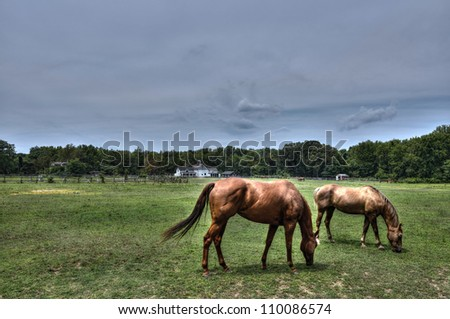 High Dynamic Photo of Horses quietly grazing on a rural Maryland farm in summer