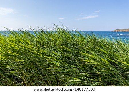 high grass with the sea in the background - stock photo