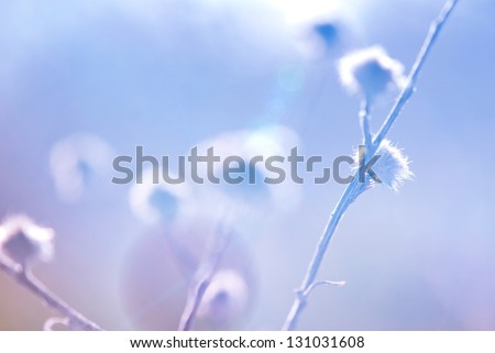 High key abstract thistle with shallow depth of field - stock photo