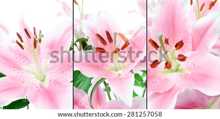 High key macro montage of pink lilies in full bloom. Back light with sharp focus on the stamens. Can easily be cropped and selected as per requirements. - stock photo