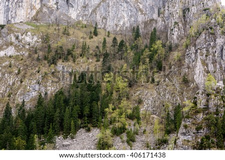 High mountain side with trees and rock. Stone avalanche.