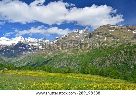 High mountains at the head of the Valpelline Valley close to Switzerland with alpine meadows in flower, above Aoste, Italy