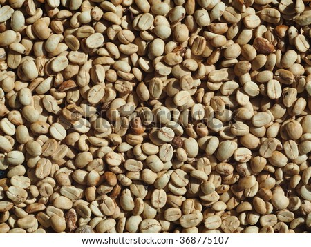 high quality high land raw green light brown yellow coffee beans dried with solar energy prepare to roast as picture backdrop or background