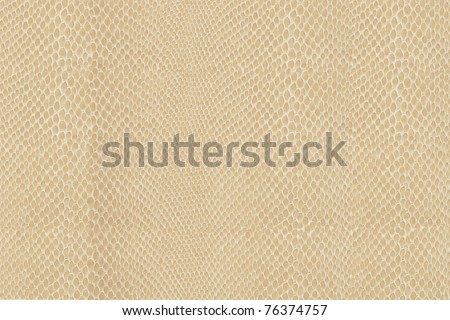 High quality snake skin pattern. - stock photo