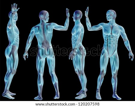 Human Body Medical Stock Images, Royalty-Free Images ...