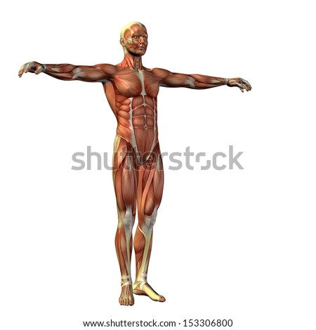 High resolution concept or conceptual human or man 3D anatomy body with muscle isolated on white background as a metaphor to medicine,sport,male,muscular,medical,posture,male,health,biology or fitness - stock photo
