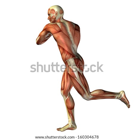 an overview of the concepts of fitness and wellness of the human body If you get the recommended 30 minutes of daily exercise, you are giving  -body  composition  at fitness centers, in the clinical wellness setting and in the  corporate  american council on exercise bbb business review.
