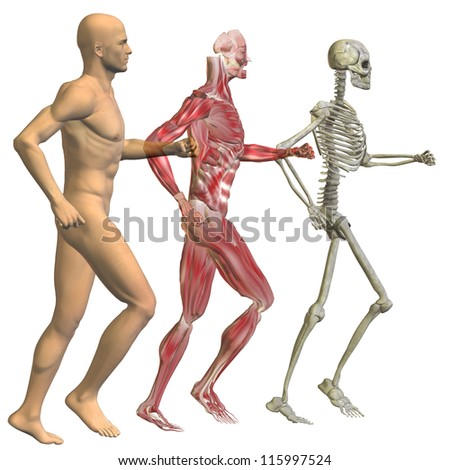 High resolution conceptual 3D human ideal for anatomy,medicine and health designs, isolated on white background. It is a man made of a skeleton and a transparent body as in a x-ray.A set or group - stock photo
